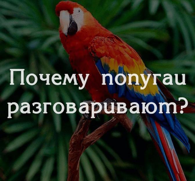 Почему попугаи разговаривают?