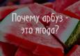 Почему Арбуз - это ягода?