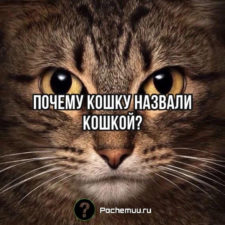 Почему кошку назвали кошкой