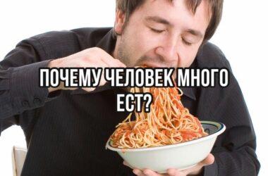 Почему человек много ест?