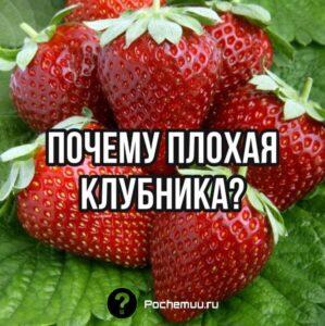 Read more about the article Урожай клубники.  Основные причины плохого сбора урожая