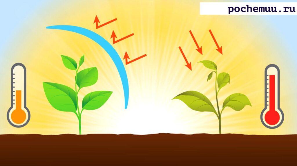 инфографика значение температру на овощи