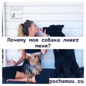 Read more about the article Почему моя собака лижет меня? Признак любви и преданности