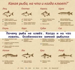 Read more about the article Почему рыба не клюёт. Когда и на что ловить. Особенности зимней рыбалки