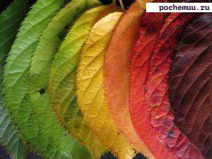Read more about the article Почему желтеют и опадают листья? Главные причины